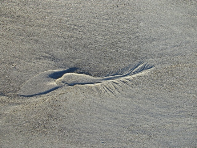 wave-traces-sandy-point-plum-island