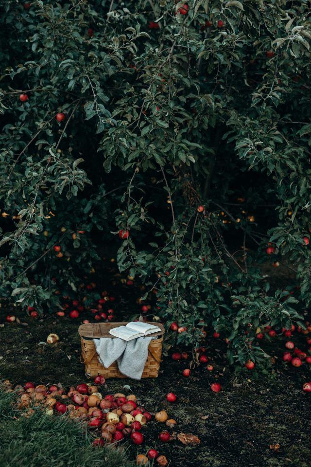 apples_picnic_basket